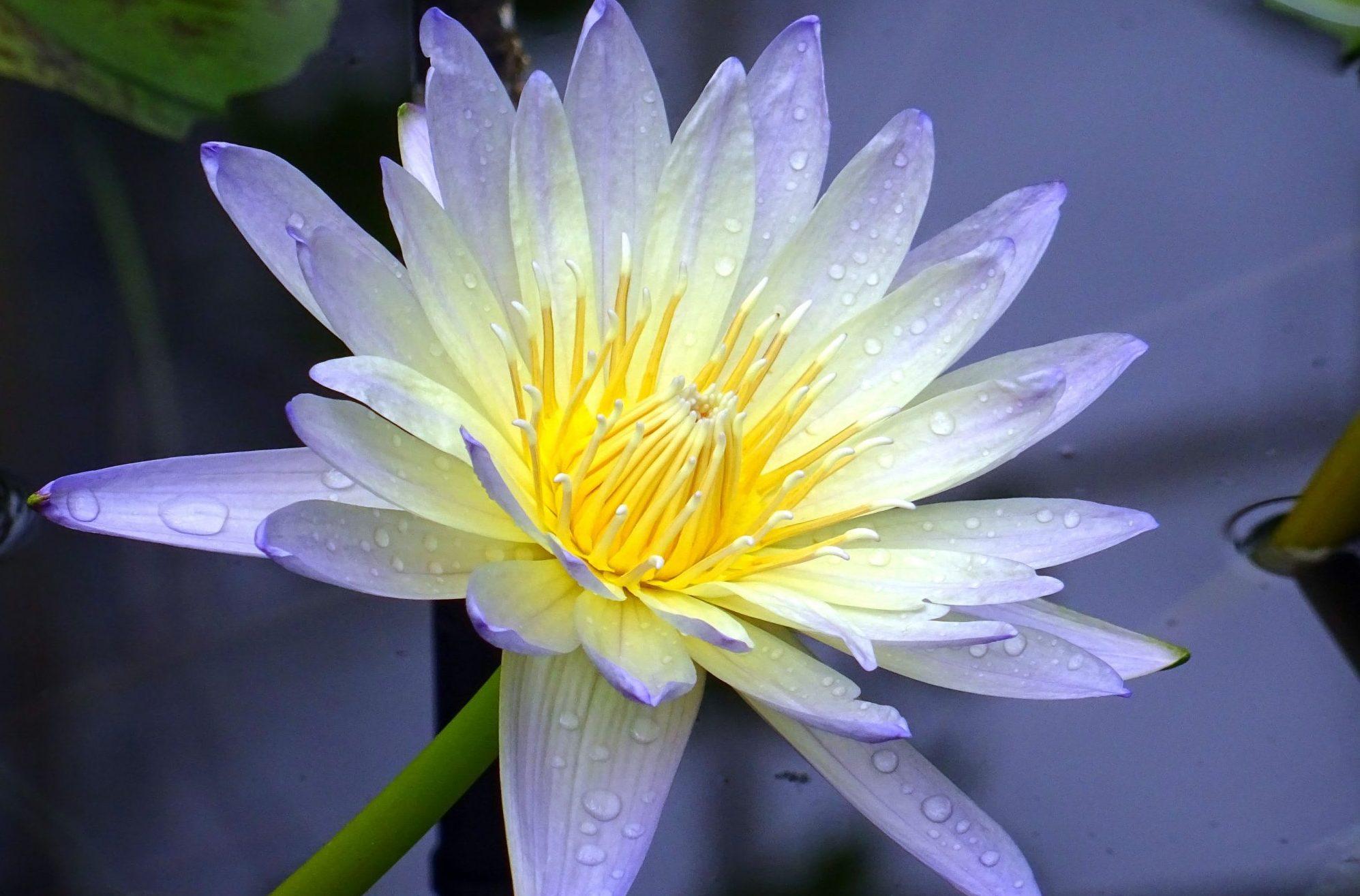 Blog voel je vrij foto van bloem Celestien