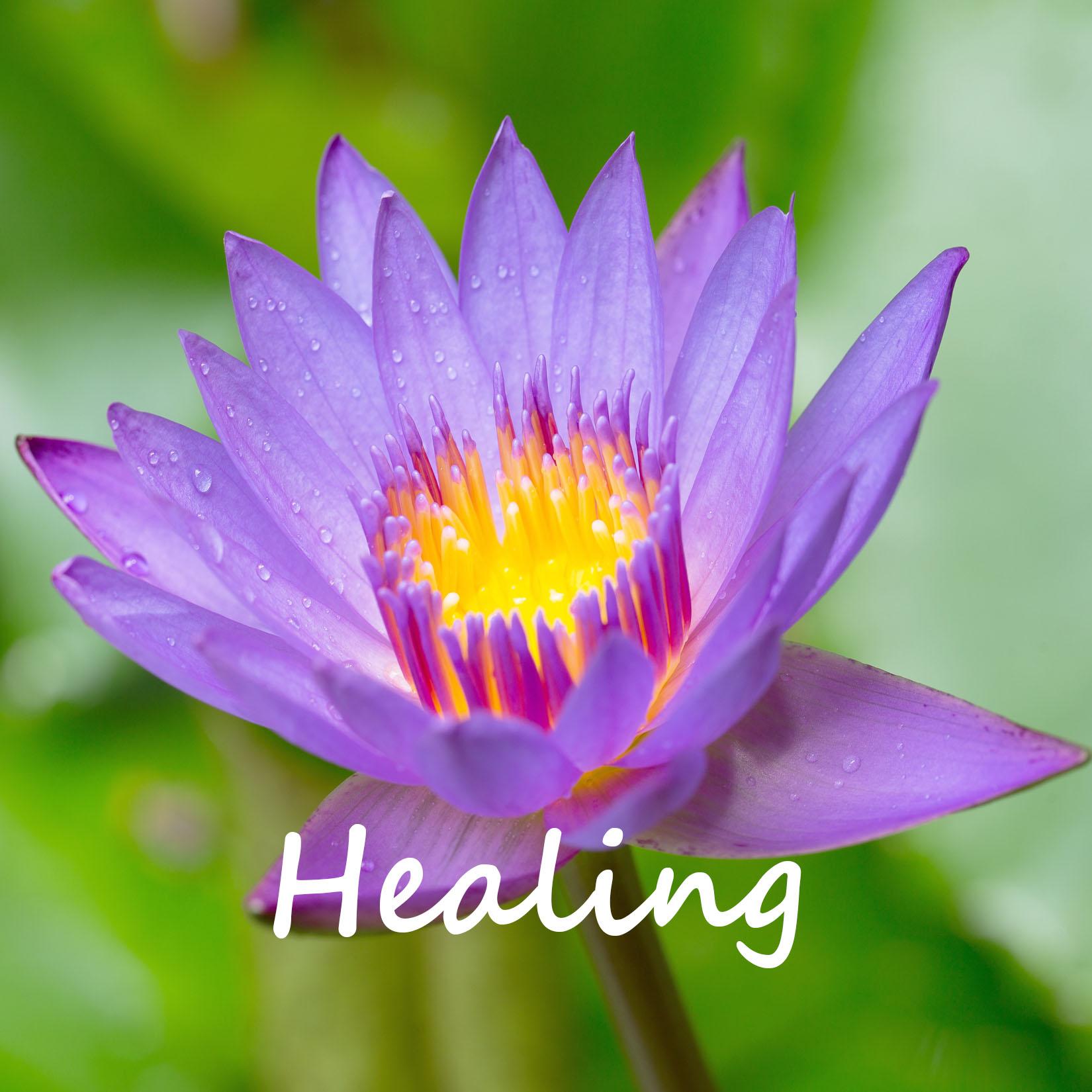 Paarse lotus praktijk voor acupunctuur healing-coaching Celestien